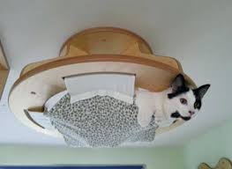 wall mounted cat furniture. Unique Mounted Cat Ceiling Hung Bed Wall Furniture Uk Set Modular Hangouts For Walls  Ceilings On Wall Mounted Cat Furniture I
