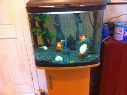 Cool Aquariums For Sale Fish Tank Of The Coolest Fish Tanks Ever Dorkly Post For Tank Cool