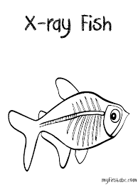 Small Picture X Ray Fish Coloring Page My First ABC