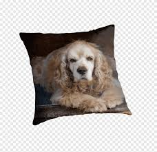 English Cocker Spaniel Dog breed Puppy ...