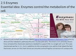 Iubmb Nicholson Metabolic Pathways Chart 2 5 Enzymes Essential Idea Enzymes Control The Metabolism