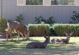 17 Solutions To Keep Deer Off Your PropertyKeep Deer Away From Fruit Trees