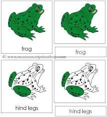 Parts Of A Frog Parts Of A Frog Under Fontanacountryinn Com