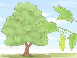 How To Identify Trees 15 Steps With Pictures Wikihow