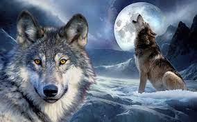 47+] Wolf 3D Wallpaper on WallpaperSafari