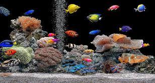 Free download 3D Fish Aquarium ...