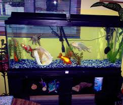 Cool Aquariums For Sale Decorations 5 Gallon Aquarium 30 Gallon Fish Tank Big Fish