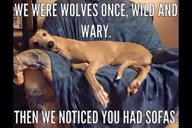 We were wolves once, wild and wary. Then we noticed you had sofas ... via Relatably.com