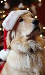 « download wallpaper or choose another screen size or phone. Christmas Dog Wallpaper Posted By Michelle Peltier
