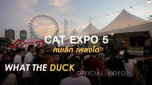 What The Duck in Cat Expo 5 - YouTube