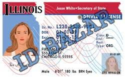 License Illinois Template Driver Psd