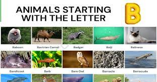 Animals That Start With B List Of 75 Animals Starting With B 7esl