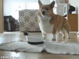 excited animal gif. Perfect Gif Excited Dog Gif GIF With Animal Giphy