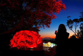 aussie lighting world. A Woman Uses Her Phone To Take Photographs Of Illuminated Sculptures Shaped Like Animals During Preview Vivid Sydney On May 20. Aussie Lighting World H