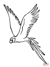 parakeet fly coloring page parrots coloring pages free coloring pages on parrot outline template