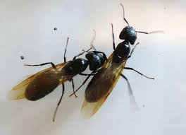 List Of Flying Insects Red And Black Bug Identification How To Use ...