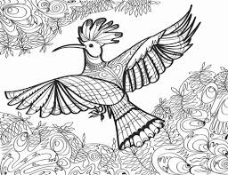 hoopoe bird coloring page for s hummingbird coloring book