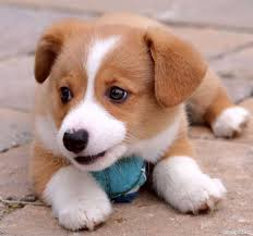 cute dogs and puppies. Wonderful And Puppies And Dogs Wallpapers  Cute Puppy Pictures With Cute Dogs And Puppies