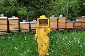 Honigernte; Jungimkerin Sabrina Christen bei der Honigernte im Naturschutzgebiet Wilder Kaiser. Zu den vielen Tiroler Spezialitäten, die durch höchste ... - jungimkerin-sabrina-christen-bei-der-honigernte-im-naturschutzgebiet-wilder-kaiser,82498129