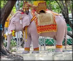 white elephant animal. Fine Elephant White Elephant  With White Elephant Animal R