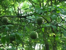 Best Fruit Trees For North Carolina  Home Design InspirationsFruit Tree Nursery North Carolina