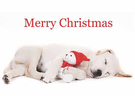 Christmas Cards Images 2018 Christmas Cards Pack Of 8 Dogs For The Disabled