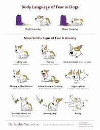 Canine Body Language Green Acres Kennel Shop Blog