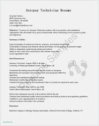 Template It Resume Format Pdf Resume Format Pdf Blank