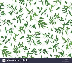 Vine Pattern Simple Forest Vine Stock Vector Images Alamy