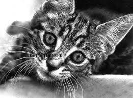 realistic cat drawing in pencil.  Pencil Cat Portrait In Pencil Drawing For Realistic D