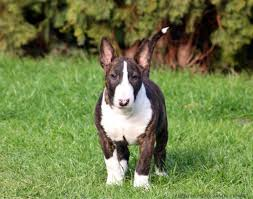 We did not find results for: Racas De Cachorro Bull Terrier Cursos A Distancia Cpt
