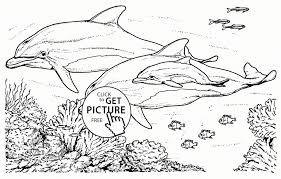 Realistic Animal Coloring Pages Realistic Dolphins Coloring Page For