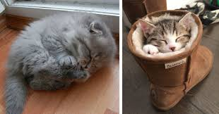 22 sleepy kittens doing what they do best sleep