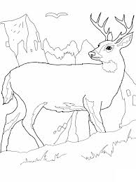Small Picture Coloring Page Deer Images