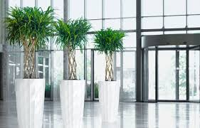 Interior landscaping office Planted Plantscaping Living Wall Concepts Air Strength Canada Office Plant Interior Landscaping