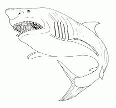 Coloriage De Vrai Requin 1001 Animaux Coloriage De Requin Tigre Pour Colorier L