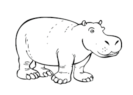 Baby Hippo Coloring Pages Baby Hippo Coloring Pages Hippopotamus