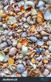 Sea Shell Collection Magdalene Project Org