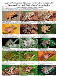 Illinois Common Frogs And Toads Of The Chicago Region
