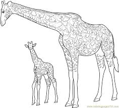 Small Picture Giraffe with Baby Coloring Page Free Giraffe Coloring Pages