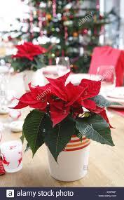 Tisch Weihnachtsstern Weihnachtsbaum Dekoriert Keine