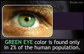 Eye Color Genetics Chart Eye Color Chart Interesting Facts About The Different Variants