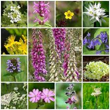 Mix Species Shade - Wildflower Loving Rp Woodland Seeds 15