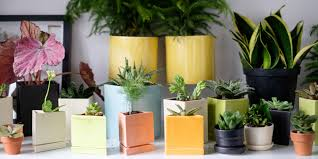 Best office cubicle design Modern Atnicco The Botanical Cubicle The Best Office Plants For Beginners