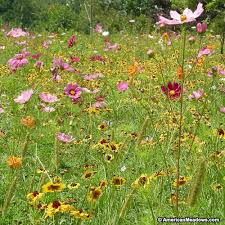 Wildflower Garden Design Beauteous Dry Area Wildflower Seed Mix American Meadows