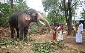 Image result for Kerala, India wiki