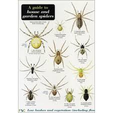 Spider Web Identification Chart A Guide To House And Garden Spiders Chart Garden Spider