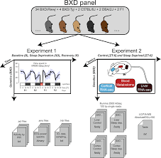 A Multi Omics Digital Research Object For The Genetics Of