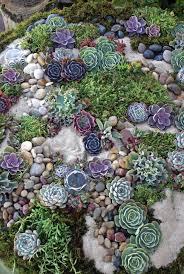 Rock Garden Design Ideas Delectable Succulent Rock Garden Garden Pinterest Succulents Garden