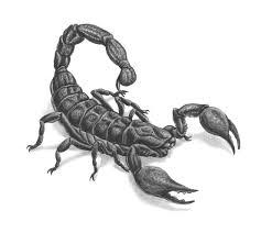 эскизы татуировок со скорпионами татуировку рф фото и эскизы